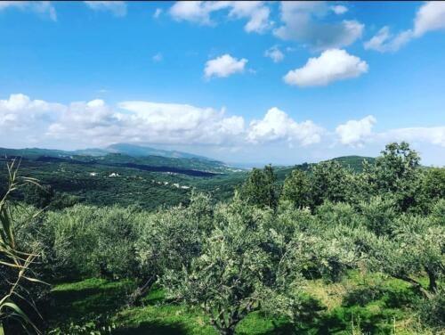 Natural Olive Oil online company
